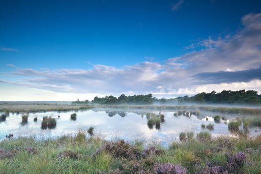 misty summer morning over swamp