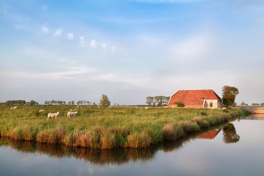 farmhouse and sheep on pasture by river