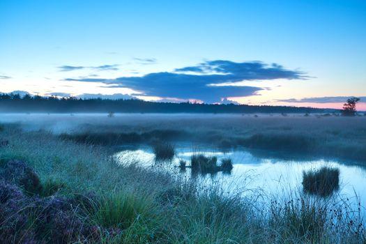 misty morning over swamp