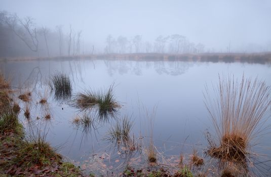 wild little lake in dense fog