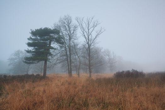 trees in dense fog