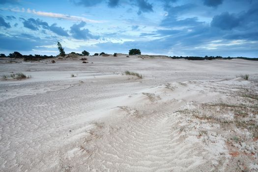 sand dunes in Netherlands