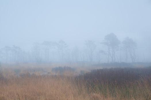 tree silhouettes in dense fog