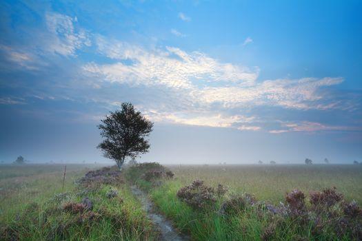 misty summer sunrise over heatherland