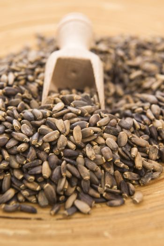 Seeds of a milk thistle (Silybum marianum, Scotch Thistle, Maria