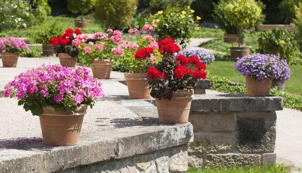 geranium and flower garden built on terrace