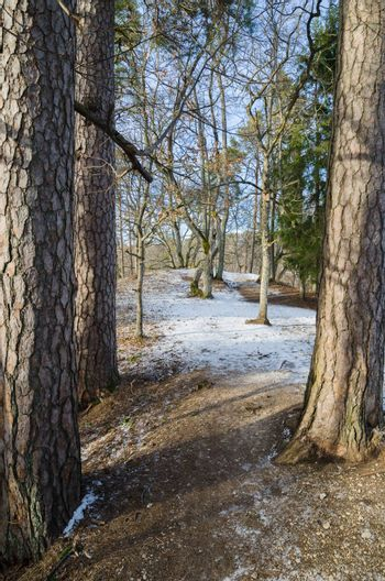 Spring landscape in a Baltic wood