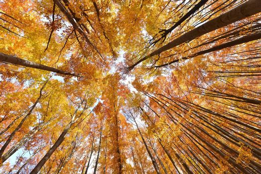 Colorful autumn tree canopies