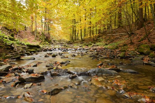 Autumn landscape with river and beautiful foliage