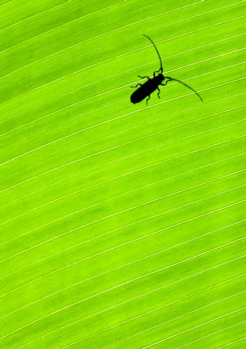 Green leaf background with a bug