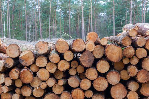 Forestry industry tree felling