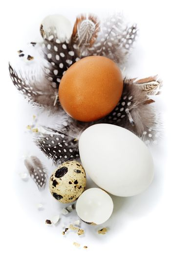 eggs and feathers