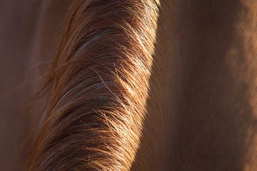 Horse mane
