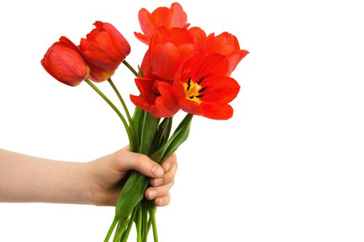 tulips in a hand
