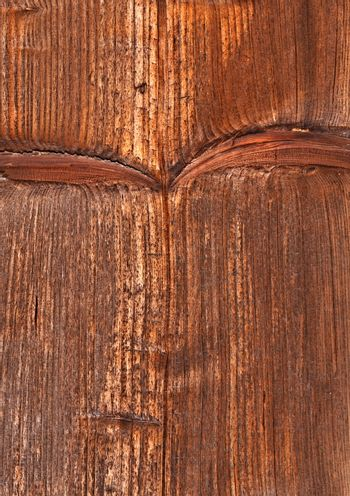 vertical structure of spruce board
