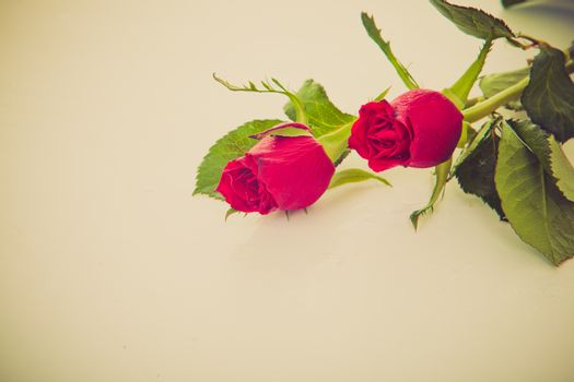 two roses against retro vintage background