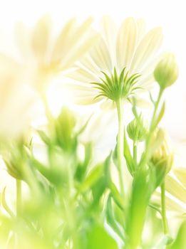Gentle floral background