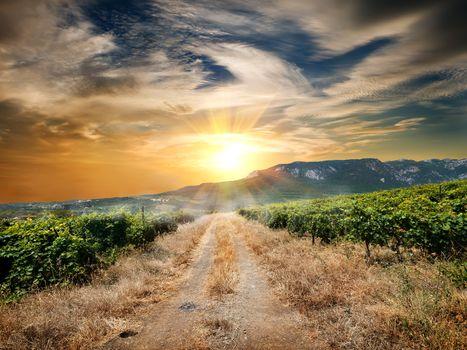 Road through a vineyard