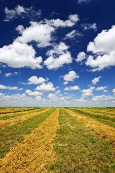 Harvested wheat on farm field in Saskatchewan, Canada