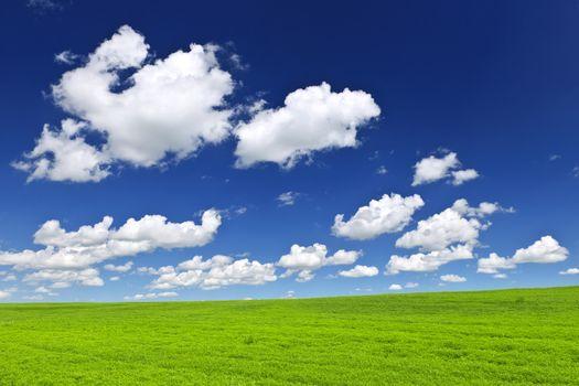 Lush green lentil and wheat fields under blue sky in Saskatchewan prairies of Canada