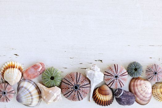 Border of Mediterranean seashells, urchins and rocks on painted wood background