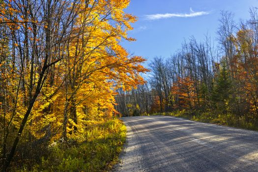 Gravel road through colorful fall forest in Ontario, Canada