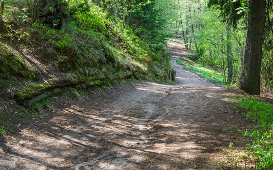 Footpath in a summer park