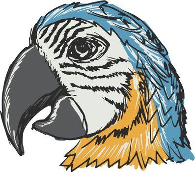 hand drawn, sketch, cartoon illustration of parrot