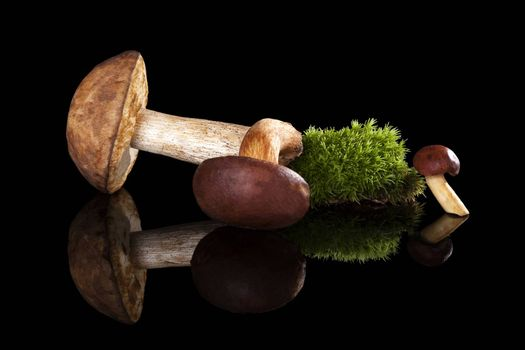 Fresh mushrooms with green moss isolated on black background. Culinary mushroom eating.