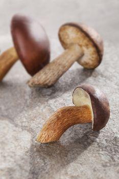 Couple of delicious fresh mushrooms on natural stone background. Seasonal mushroom eating.