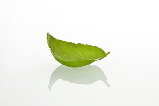 Basilicum leaf on white background