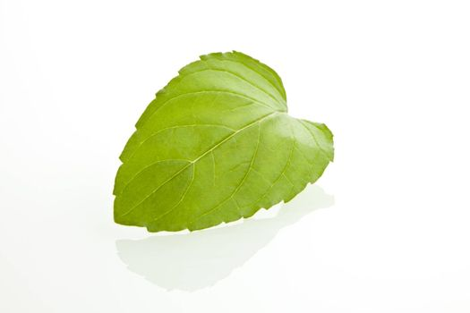 Fresh green mint leaf isolated on white background