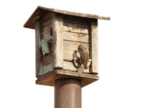 bird feeders. tree house for the birds feeding her young ones