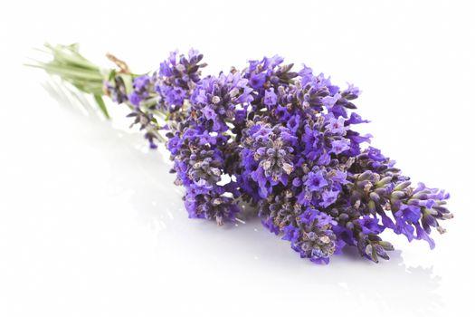 Lavender bundle isolated.