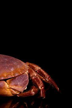 Seafood. Crab