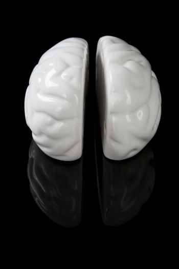 Left and right brain.