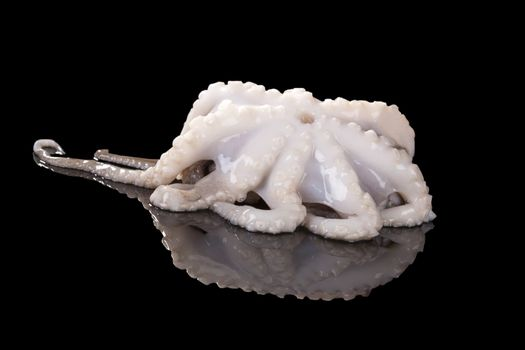 Octopus isolated on black background.