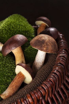 Delicious edible boletus mushrooms.