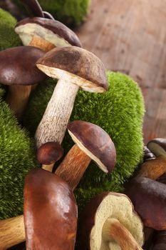 Culinary edible mushrooms.