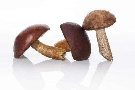 Edible mushrooms.