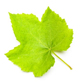 One grape leaf isolated on white, close up