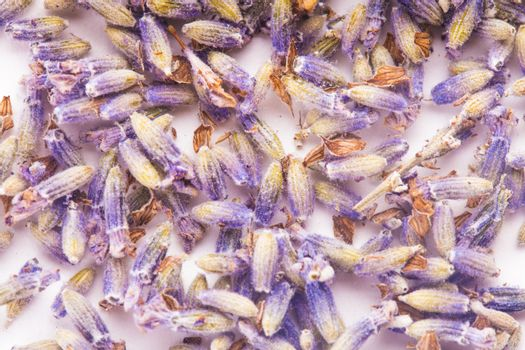 Dry lavender seeds isolated on white background