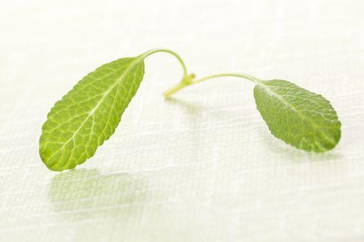 Sage leaves.