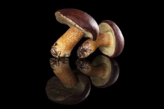 Edible mushroooms isolated.