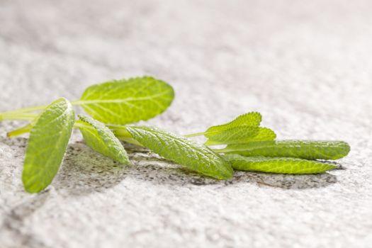 Salvia twig on stone background.