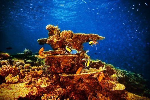 Majestic marine life