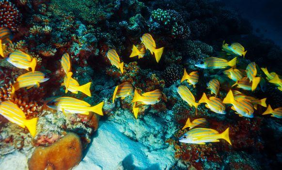 Marine life background