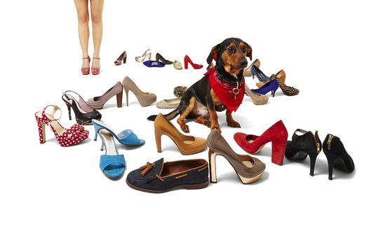Female legs, dachshund and shoes