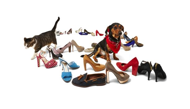 cat, dog and shoes
