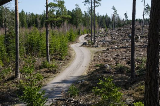 Winding forest dirt road